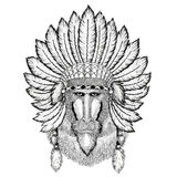 Monkey, baboon, dog-ape, ape Wild animal wearing indiat hat with feathers Boho style vintage engraving illustration. Wild animal wearing indiat hat with feathers Stock Images