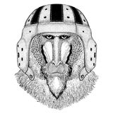 Monkey, baboon, dog-ape, ape Wild animal wearing rugby helmet Sport illustration Stock Photography