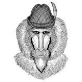 Monkey, baboon, dog-ape, ape Wild animal wearing tirol hat Oktoberfest autumn festival Beer fest illustration Bavarian. Wild animal wearing tirol hat Oktoberfest Royalty Free Stock Photos