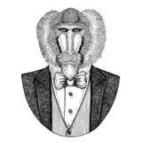 Monkey, baboon, dog-ape, apeHipster animal Hand drawn illustration for tattoo, emblem, badge, logo, patch, t-shirt Royalty Free Stock Photo