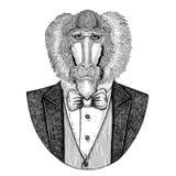 Monkey, baboon, dog-ape, apeHipster animal Hand drawn illustration for tattoo, emblem, badge, logo, patch, t-shirt Stock Photos