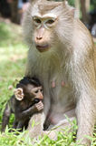 Monkey with baby Stock Photo