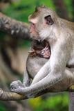 Monkey and baby Stock Photo