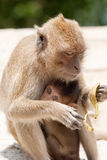 Monkey with baby Royalty Free Stock Photo