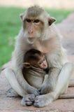 Monkey with baby Stock Image