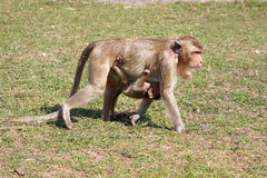 Monkey and baby Royalty Free Stock Photos