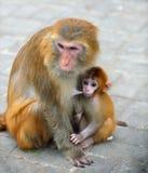 Monkey baby stock images