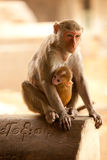 Monkey and baby. Mother and baby monkies looking on Royalty Free Stock Photo