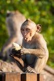 Monkey baby Royalty Free Stock Photo