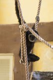 Monkey baby hang on rope. Monkey baby is hanging on rope and have fun Royalty Free Stock Photo