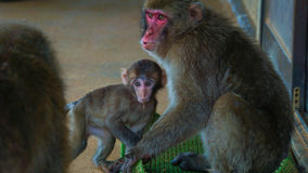 The monkey and baby Royalty Free Stock Photography