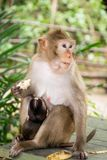 Monkey with baby monkey stock photo