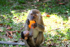 Monkey and baby Royalty Free Stock Images