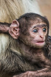 Monkey baby Royalty Free Stock Photography