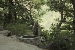 Monkey with baby sitting on the track in the Forest royalty free stock image