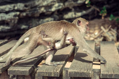 Monkey with a baby. Royalty Free Stock Photos