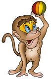 Monkey and ball Stock Images