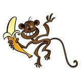 Monkey with banana Stock Image