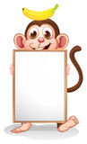 A monkey with a banana above his head holding an empty whiteboar Royalty Free Stock Image