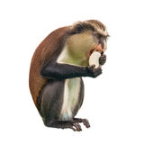 Monkey with a banana. On a white background stock photo