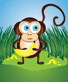 Monkey with Bananas. Monkey gets caught with bananas Stock Image