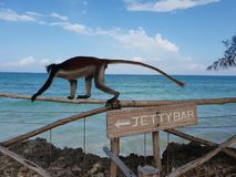 monkey at the bar stock image