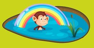 Monkey in a bath Stock Photo