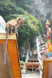 Monkey at Batu Caves hindu temple. Gombak, Selangor. Malaysia. Batu Caves is a limestone hill that has a series of caves and cave temples in Gombak Stock Photos