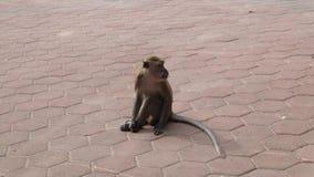 Monkey. A monkey at Batu Caves in Kuala Lumpur, Malaysia Stock Image