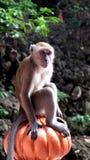 Monkey. A monkey at Batu Caves in Kuala Lumpur, Malaysia Stock Photos