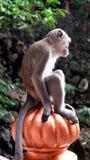 Monkey. A monkey at Batu Caves in Kuala Lumpur, Malaysia Stock Images