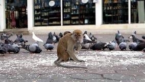 Monkey. A monkey at Batu Caves in Kuala Lumpur, Malaysia Royalty Free Stock Photography