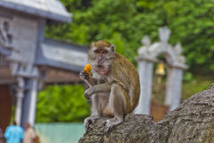 Monkey at the batu caves Stock Photography