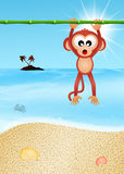 Monkey on the beach Stock Photography