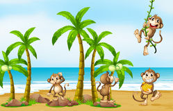 Monkey on beach Royalty Free Stock Photography