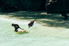 Monkey Beach Stock Images
