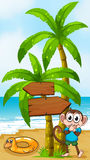 A monkey at the beach with a toy standing near the palm tree Stock Photos