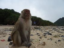 Monkey in the beach stock photo