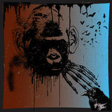 Monkey, the beast Royalty Free Stock Images