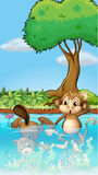 A monkey and a beaver in the pond Stock Photos