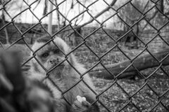 Monkey Behind Wire Mesh Fence Stock Images