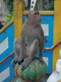Monkey betore cave. Stock Image