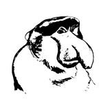 A monkey with a big nose (cahow, Khanin) Royalty Free Stock Photos
