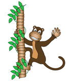 Monkey with big smile Royalty Free Stock Photography