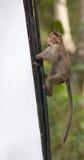 Monkey on billboards. Monkey climbs on the billboard stock photos