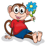 A monkey with a blue flower Stock Photography