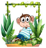 A monkey with a blue shirt in the garden Stock Image