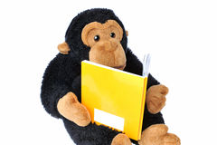 Monkey with book. Close-up of a  stuffed monkey reading a book Royalty Free Stock Photo