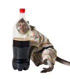 A monkey with a bottle of fizzy drink Royalty Free Stock Photos