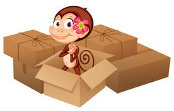 A monkey and boxes Royalty Free Stock Image